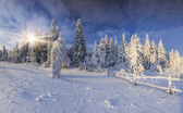 Sunny winter  mountain forest — Stock Photo