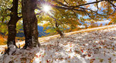 First snow in mountains forest — Stock Photo