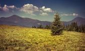 Pico de las montañas en las montañas de los cárpatos — Foto de Stock