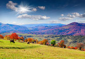 Autumn panorama of mountains — Stock Photo