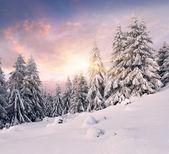 山の冬の日の出 — ストック写真