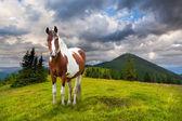 Häst i bergen — Stockfoto