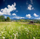 Mountains village with field of camomiles — Stock Photo