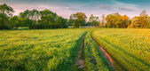 Morning panorama of the spring meadow — Stock Photo