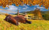 Sovande häst i äng — Stockfoto