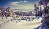 Sunny winter landscape in the mountains — Stock Photo