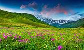 Alpweiden im kaukasus — Stockfoto