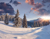 Sunrise with snow covered trees. — Stockfoto