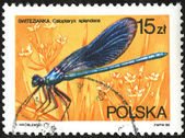 Poland stamp with Calopterix splendens  insect — Stock Photo
