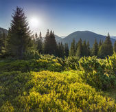 Summer landscape in the Carpathian mountains. — Stockfoto