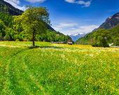 Alpine meadows near the village of Bondo. — Stok fotoğraf