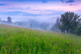 Foggy summer morning in the mountains. — Stock Photo
