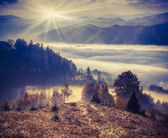Foggy autumn morning in the mountains.  — Foto Stock