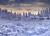 Snowfall covered the trees and houses — Stock Photo