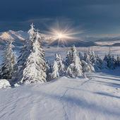 Hory v zimě — Stock fotografie