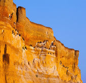 Blabk cormorants on huge cliff — Stock Photo