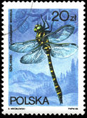 Poland stamp shows Cordulegaster annulatus insect — Stock Photo
