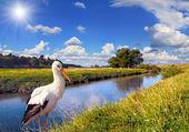River with a crane — Zdjęcie stockowe