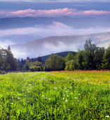 Summer morning in the mountains — Stock Photo