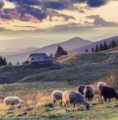 Autumn landscape in mountain village. — Stock Photo