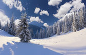 Winter landscape with snow covered trees. — Stock Photo