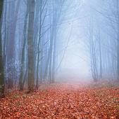 тропа в осеннем лесу — Стоковое фото