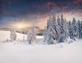 Winter  in the mountains — Stockfoto