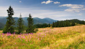 Summer landscape in the Carpathian mountains — Foto de Stock