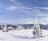 Winter landscape in the Carpathian mountains — Stock Photo