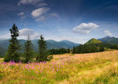 Summer landscape in the Carpathian mountains — Stock Photo