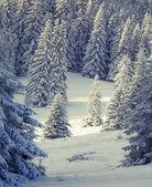 Snöfall i vinter skog. — Stockfoto