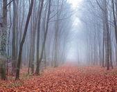 在秋天的森林小径 — 图库照片