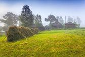 Haymaking in a Carpathian village — Stock Photo