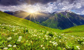 Fields of flowers in the mountains — Stock Photo