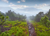 Foggy mountains at summer — Stock Photo