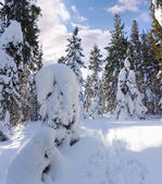 Winter panorama with snow covered trees — Stock Photo