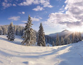 Winter snow covered trees. — Stock Photo