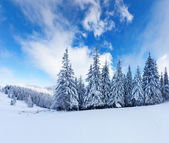 Winter in the mountains — Stock Photo