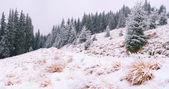 Eerste sneeuw in het forest — Stockfoto