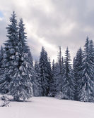 Landscape of the Carpathian mountains — Stock Photo