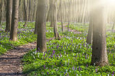 Blooming fields of flowers in forest — Stockfoto