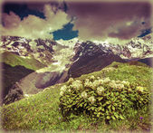Bush of rhododendron in Caucasus mountains — Stock Photo