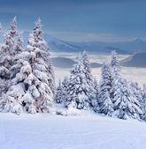 霧深い山の冬の風景 — ストック写真