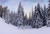 Trees covered with hoarfrost in forest — Stock Photo