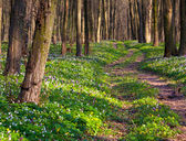 Road in spring forest — Stock Photo