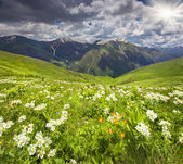 Fields of blossom flowers in the Caucasus mountains — Stock Photo