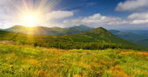 Summer landscape in the Carpathian — Stock Photo