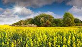 Renkli çiçek alan kolza — Stok fotoğraf