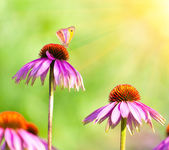 Blommor och fjäril — Stockfoto