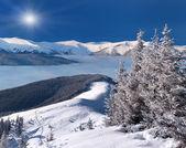 Bomen bedekt met sneeuw in de bergen — Stockfoto
